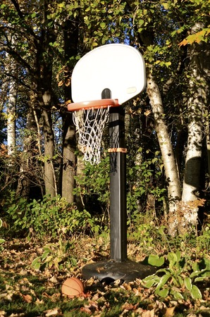located: A basketball is left lying in the autumn leaves alongside a woodbine where a backboard, standard, hoop and net are located.