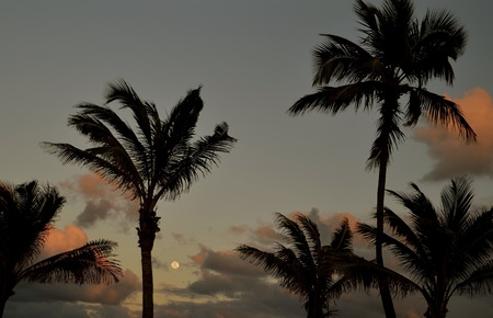 appears: The full moon appears between two silhouetted palm trees as the cloud reflect colors of the sunset