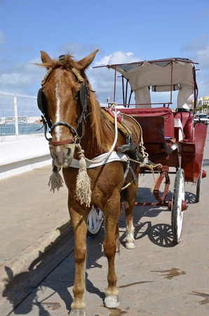 horse pull: A solitary horse and carriage is waiting to transport tourists in the island of Cozumel Stock Photo