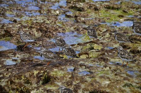 camouflaged: Along the shoreline camouflaged in the moss, rocks, an sea woods are a small flock of birds