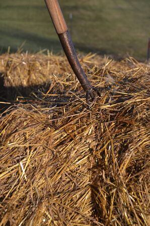 tines: Old three tined pitch is embedded into a bale of straw Stock Photo