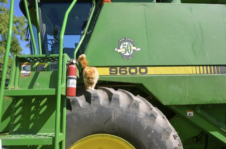 deere: GEORGETOWN, MINNESOTA, July 28, 2015: A self propelled combine with a cat visitor is a  a product of John Deere Co, an American corporation that manufactures agricultural, construction, forestry machinery, diesel engines, and drivetrains.