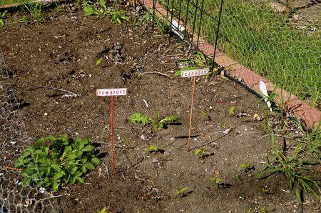 トマトとニンジンの庭し unplanted と無人のまま。 写真素材