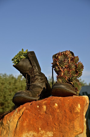 fatigues: A pair of Army combat black boots are filled and decorated with pine cones and acorns. Stock Photo