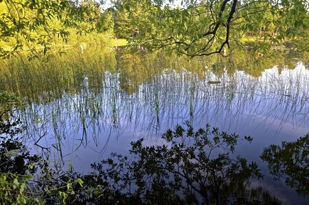 The early morning sun casts the reflections, of water plants, reeds, and tree leaves on the  water.