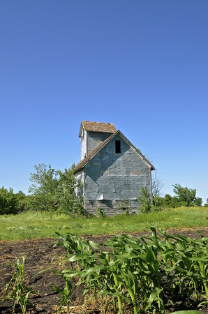 An abandoned small granary or elevator viewed from a corn field with an open door is surrounded by volunteer bushes.