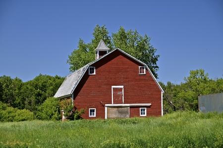 Een oude rode heupdakskuur met een koepel en hooi loft wordt omringd door groeiende struiken en lang gras. Stockfoto