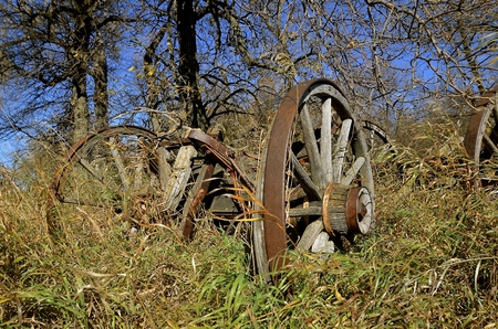 Rickety old wooden wagon with rotting spokes in the hub is decaying ion the autumn colored woods