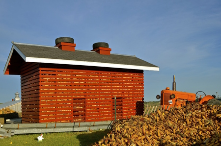 drying corn cobs: ROLLAG, MINNESOTA, Sept 1, 2016: A Case tractor is parked next to a red slatted corn crib at the West Central Steam Threshers Reunion(WCSTR) where 1000s attend each Labor Day weekend in Rollag, MN each year.