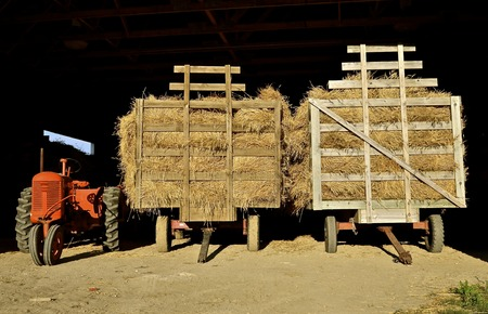bundles: An old orange tractor and two loaded hayracks full of grain bundles are parked in the entrance of a steel shed