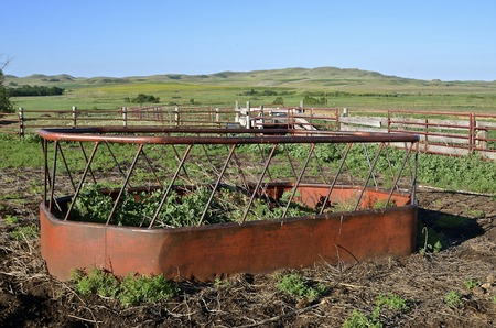 overtaken: Old cattle feeder for holding hay for beef animals in an abandoned feedlot,  is being overtaken by weeds