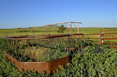 overtaken: Old cattle feeder for holding hay for beef animals in an abandoned feedlot is overtaken by weed