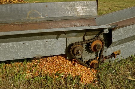 hopper: Corn kernels spilled from at the connecting point of the hopper and elevator
