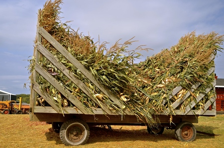 A load of corn shocks on a rack are ready to be used as feed or chopped up as silage