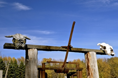fencepost: Skulls of  beef animals displayed on a rural fencepost and loading chute