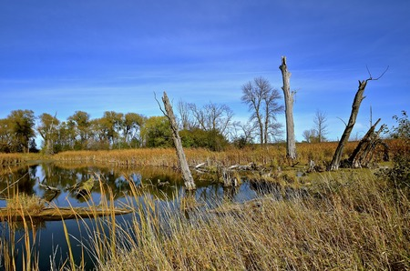 Autumn colored pond of water, red grass and trees in a swampy slough