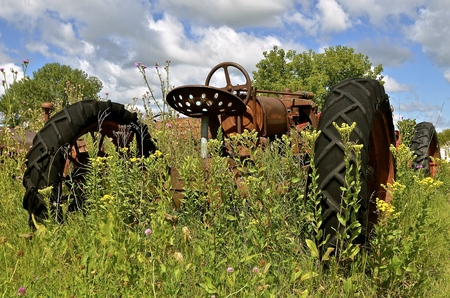 An old rusty tractor is left and forgotten in a patch of blooming thistles.