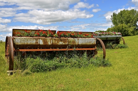 LAKE PARK, MINNESOTA, September 26,2016:Old the Massey Harris Massey name on the rusty grain grill being used as a flower box  disappeared when a merger of Massey Harris and the Ferguson Company farm machinery manufacturer occurred in 1953, to become Mass Editorial