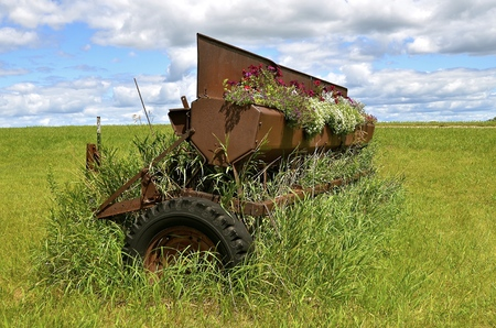 seeding: An old grain drill with a metal seed box is full of blooming flowers