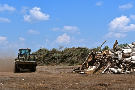 A front end loader with teeth  leaves a dust trail as it carries a log to a city compost pile of trees and branches Stock Photo