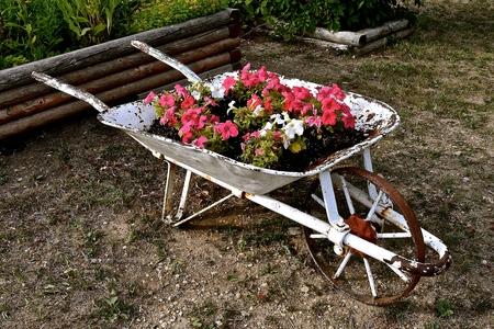 Beau An Old Rickety Rusty Metal Wheelbarrow Functions As A Flower Garden. Stock  Photo   84104826