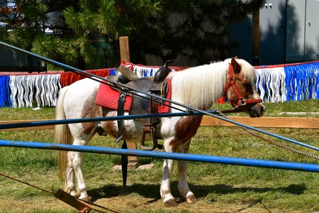 A pony with a saddle is attached to an arm of a carrousel for children to receive rides as a festival. Banque d'images