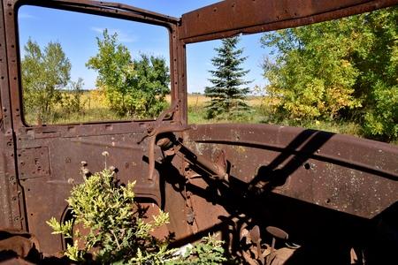 Weeds growing inside the cab of a deteriorated rusty car from the late 1920s.