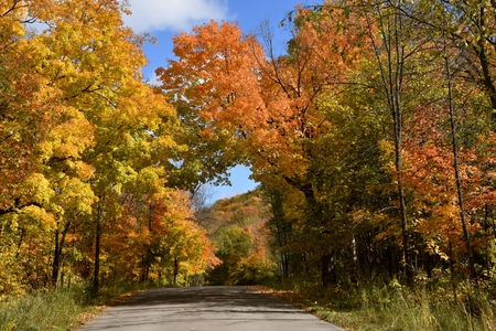 A paved road leads in a canopy of autumn colored maple tree leaves. Stock Photo