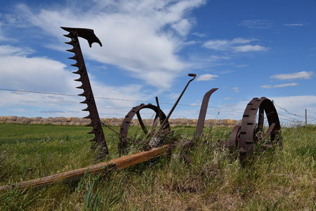 An old hay mower pulled by horses is left in the long grass with the sickle bar in the upright position.