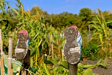 The soles of a pair of  muddy shoes are hung on garden posts to dry after working in a garden Stock fotó
