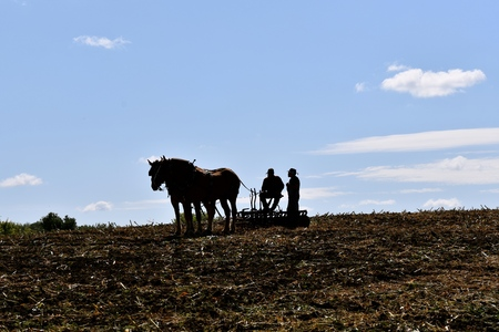 Two unidentified farmers and a team of horses pulling a disk in the stubble of a corn field are silhouetted against the sky