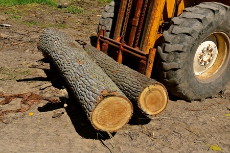 An old fork lift collects several logs to be transported to the cut mill.