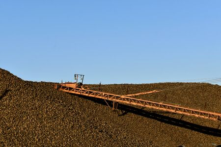 A long elevator shaft transports sugar beets to a huge pile Stock Photo