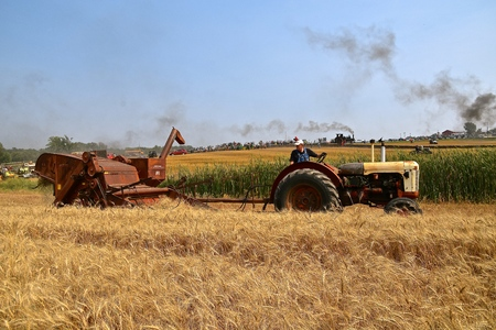 ROLLAG, MINNESOTA, Sept 2, 2017: An old Case tractor pulls an International combine harvesting wheat  are demonstrating  at the annual WCSTR farm show in Rollag held each Labor Day weekend where 1000s attend.