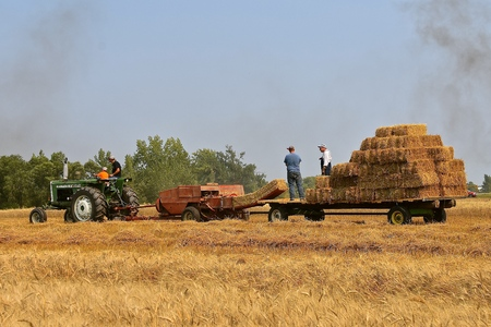 ROLLAG, MINNESOTA, Sept 2, 2017: A field demonstration of haying using an Oliver 1650 tractor and New Holland baler  at the annual WCSTR farm show in Rollag held each Labor Day weekend where 1000's attend.