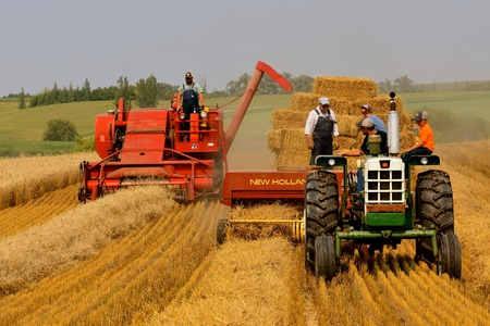 ROLLAG, MINNESOTA, Sept 2, 2017: A field demonstration of baling straw using an Oliver 1650 tractor and New Holland baler  at the annual WCSTR farm show in Rollag held each Labor Day weekend where 1000's attend.