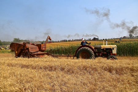 ROLLAG, MINNESOTA, Sept 2, 2017: International combine demonstrates olden days of  harvesting at the annual WCSTR farm show in Rollag held each Labor Day weekend where 1000s attend.