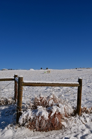 Corner fence posts and barbed wire are covered by a fresh coating of snow with several painted artsy cows in the distant pasture.
