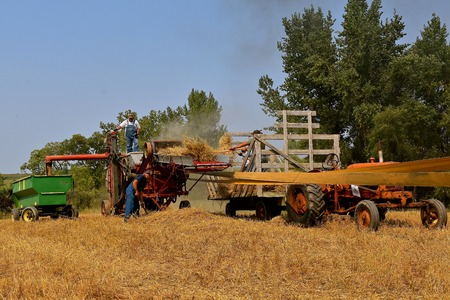 Unidentifiable workers involved harvesting grain using an old threshing machine. 스톡 콘텐츠
