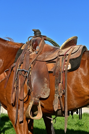 Closeup of a saddle and lariat mounted n a horse 写真素材