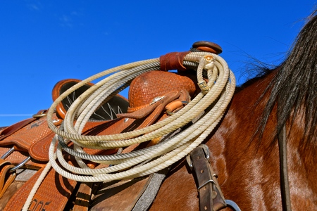 Closeup of a saddled horse with a rope for lassoing attached to the pommel Stock Photo - 102525773