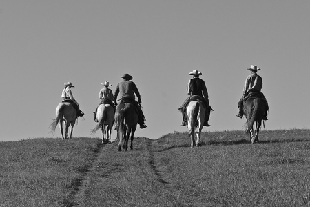 Unidentified cowboys and cowgirls ride over the prairies headed to a roundup and branding session. 版權商用圖片