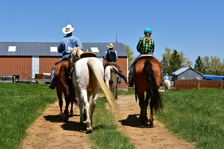 Unidentified cowboys and cowgirls ride horseback as the head  head  back to the ranch after a roundup and branding session.