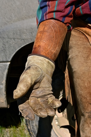 The hand of a cowboy in a roundup is protected with leather gloves and arm band from rope burn.