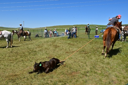 MUD BUTTE, SOUTH DAKOTA, May 23, 2018: The annual roundup and branding of cattle brings the area cowboys and cowgirl in the process on the One Wing Triangle Ranch.