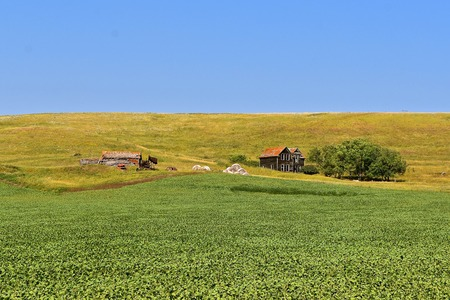 The remnants of an old deserted farmstead are on the edge of a bean field.