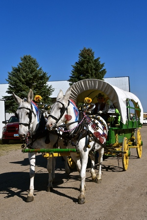 Decorated and harnessed mules pull an old covered wagon in a parade Stok Fotoğraf