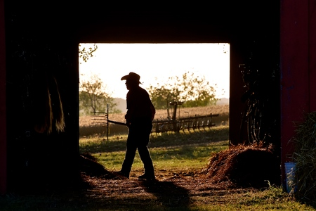 ROLLAG, MINNESOTA, September 1, 2018: An unidentified man cleaning a horse barn is silhouetted in the doorway at the annual WCSTR farm threshers reunion in Rollag held each labor Day weekend where thousands attend.