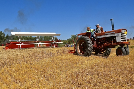 ROLLAG, MINNESOTA, September 1, 2018: An old International 460 tractor and swather participates in a field demonstration at the annual WCSTR farm threshers reunion in Rollag held each labor Day weekend where thousands attend.