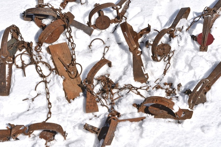 A collection of old rusty animal traps are left in a snow bank Stock fotó